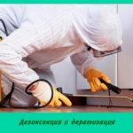 Дезинсекция и дератизация