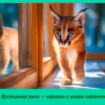 Пустынная рысь – каракал и кошка каракет