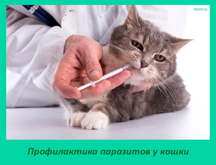 Профилактика паразитов у кошки